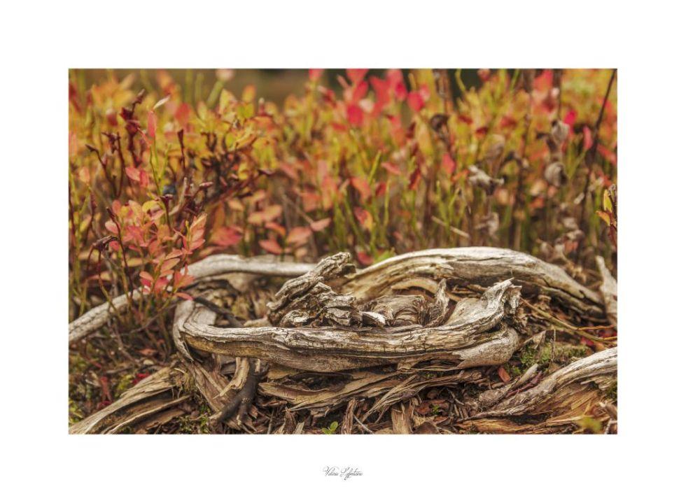 La pointe sans bois, photo de Val Lafontaine